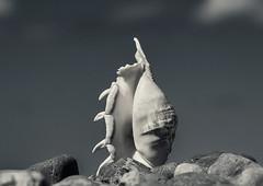 Still Life # LXXVI .... ; (c)rebfoto (rebfoto) Tags: blackandwhite bw stillife conch etude conchshell