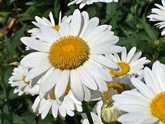 Flowers (pmarella) Tags: flowers jerseycity pmarella riverviewpkproductions