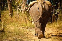 Elephant !! (Kanishka **) Tags: trip wild india elephant animal canon fun zoo tour tail joy tourist karnataka carnivorous coorg madikeri samrat kanishka 550d kanishkasamrat indianelepahant