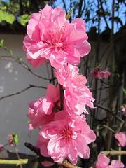 IMG_2705.JPG (Willem vdh) Tags: china asia yunnan tonghai 2011