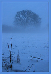 The Winter Blues! (Jonny Hirons) Tags: uk greatbritain blue winter snow cold tree nature grass silhouette vertical outdoors bare yorkshire blues growth lone environment bleak northyorkshire harsh unforgiving
