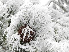 Schneezauber am Ritten
