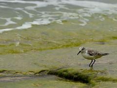 Will peck for food (I'm a Watermelon) Tags: bird wildlife kauai haenastatepark