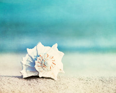 """Paradise"" (CarolynsHope) Tags: blue summer beach coast sand aqua shell coastal seashell conch"