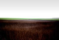 Bison herbs (Julien Superb-Owl) Tags: nature grass landscapes herbs country bison