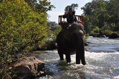 Tad Lo (yuou) Tags: travel elephant waterfall lo backpacking motorcycle tad laos lao touring d90 bolaven tadlo salavan 18250mm