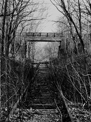 0318 - Fresh Pond Abandoned Rail Track (iluvgadgets) Tags: blackandwhite railtracks twittographers