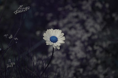 Wild Flower! (judo_dad1953) Tags: life wild flower nature floral