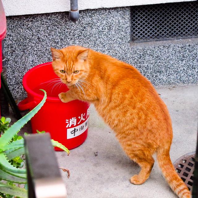 Today's Cat@2012-02-12