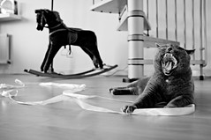 Domestic Jungle (Chris JL) Tags: bw horse cat stair snake wildlife domestic jungle ribbon roar winston britishblue fujix100 chrisjl
