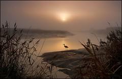 Solitary Figure (adrians_art) Tags: winter plants mist heron birds fog sunrise reeds silhouettes riverbank