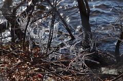 DSC_0035 (rlg) Tags: ice february monday 13 2012 0213 fpr 201202 20120213 nikond5100 02132012