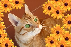 My Mr Ricky (Chrismatos Too busy, sorry) Tags: park red orange pet flower color macro portugal nature animal closeup fauna cat portraits canon chat europe tabby places gato gatti poses