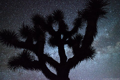 Dark Sky Joshua Tree (Eric Hines Photography) Tags: california stars timelapse joshuatree nightsky owensvalley milkyway 5dmarkii zeiss25mmf2