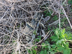 DSC00552 (SixbyFire) Tags: archaeology plane airplane flying san crash aviation tiger flight super line lockheed pacifica bruno constellation 282 wreckchasing