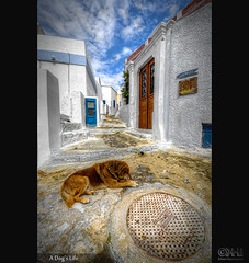 A Dog's Life (HDR) (farbspiel) Tags: dog nikon wideangle santorini handheld griechenland dri hdr thira hdri topaz adjust superwideangle infocus grc 10mm ultrawideangle denoise d7000 kykladon nikkorafsdx1024mmf3545ged