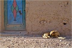 Douar Oulad Boukhalfa (jboisard.photo) Tags: maroc oriental merzouga erg chebbi fes missour enjil jerome jérôme boisard jérômeboisard jboisard jboisardphotography jboisardphoto wwwfacebookcomjboisardphoto