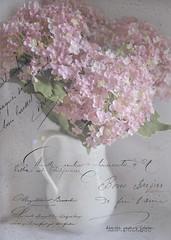 Soft and Sweet (Denise @ New Mercies I See) Tags: pink flowers light white whisper textures processing brushes hazy summitcounty oho frenchkiss mogadore nikond90 softandsweet kimklassen beyondlayers