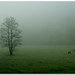 The pasture in the fog