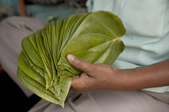 Full Deck Paan Leaf