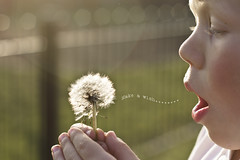 Make a wish....... (k4♥wea) Tags: park light fence mouth nose eyes hands warm bokeh blow seeds dandylion makeawish