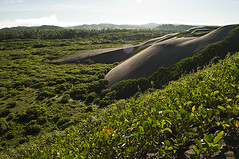 [intersection of dunes and greenery]