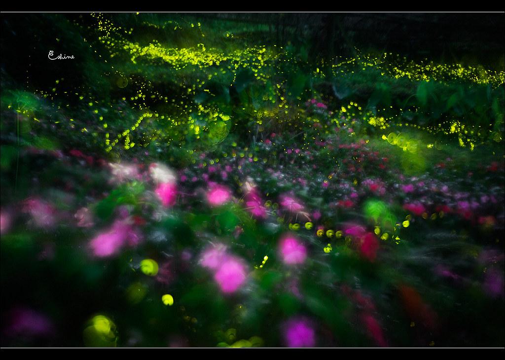 http://farm8.static.flickr.com/7055/7138930257_c116ae3777_b.jpg