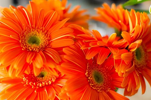 photo flower flowers plants plant