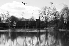 there's the school (Fardo.D) Tags: park school cloud white black reflection bird water monochrome clouds reflections flying pond elementaryschool groningen primary primaryschool oosterpark ond