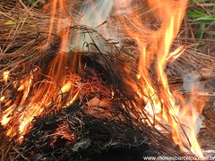 DSCN2488 (moisesbarcellos) Tags: life book power dancing flames books burn firedancing ember fier