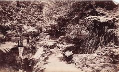 A Creek in Sydney Botanic Garden (Royal Australian Historical Society) Tags: nature garden sydney australian royal australia nsw historical botanic garden rahs royal society century 20th