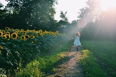My Angel (AmazingFlavaPhotos) Tags: flowers sunset summer flower beauty true angel photography mine foto dream running daily photograph sunflower