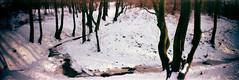 (roman_sekatsky) Tags: park trees winter panorama sun snow film nature lomo lomography russia kaliningrad sprocketrocket