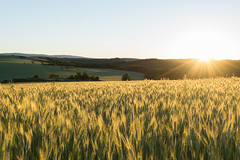 Morning (Pavol Kopinec) Tags: morning light nature field sunrise landscape warm wheat joy hills easy happines litava