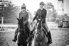 Carol Fisher and Amira (EASY GOER) Tags: park horses horse sports belmont racing races thoroughbred equine