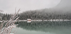 3F0A5230 copy 5 (Photography by Ramin) Tags: park lake canada beauty rockies canadian louise national alberta banff