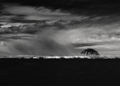 A Dream within a Dream (hiromichiendo) Tags: longexposure blackandwhite bw seascape abstract tree art nature monochrome japan landscape still fineart silence zen nd minimalism tranquil