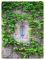 La discrte (Doonia31) Tags: fentre mur feuillage lierre vert barreaux ferforg pierre gers volets feuilles verdure
