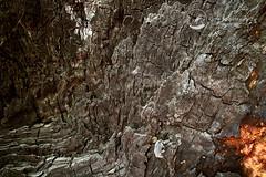 _7507720-Edit.jpg (NSStone) Tags: landscapes log treetrunk marysville intimatelandscapes keppellfalls