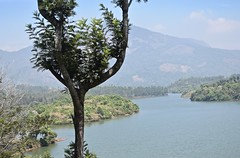 The Tree and the View (The Spirit of the World) Tags: india lake leaves landscape highlands haze view shoreline kerala foliage viewpoint munnar southernindia