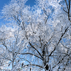 Freezing a winter's paradise scene that all will disappear soon (B℮n) Tags: blue trees winter sky sun white snow hot cold tree ice coffee amsterdam forest walking geotagged topf50 frost crystals paradise quiet path air skating dream freezing 10c sunny fresh clear crisp freeze enjoy layer backlit temperature wintertime wonderland whitesnow invigorating pleasure colder absorbed sportpark ripe hoar degrees noord exhilarating wintry celcius energizing 50faves zunderdorp buikslotermeer buikslotermeerdijk zwartegouw weeren geo:lat=52401903 geo:lon=4958804