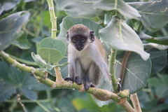 "Primates • <a style=""font-size:0.8em;"" href=""http://www.flickr.com/photos/57634067@N04/6783228960/"" target=""_blank"">View on Flickr</a>"