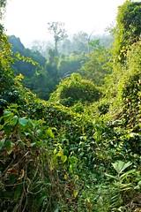 Mountain Forest at Pa La-U waterfall, Prachuap Khiri Khan, Thailand (UweBKK ( 77 on )) Tags: mountain forest thailand waterfall asia sony khan southeast alpha dslr palau 550 prachuap khiri flickrtravelaward