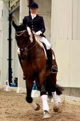Dressage with a horse with bitless bridle