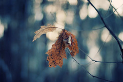 drape (ewitsoe) Tags: trees winter snow cold fall forest leaf sticks nikon europe quiet seasons bokeh branches freezing poland moment bluetones d80
