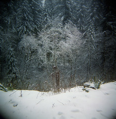 On a mountain, in a forest, during winter (Zeb Andrews) Tags: winter snow cold tree film oregon forest square holga bare branches plastic pacificnorthwest larchmountain bluemooncamera
