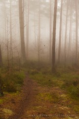 Misty Woods (Chris_Hoskins) Tags: forest winterwoods mistyforest foggyforest mistywoods foggywoods