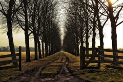 Tree row (Joost Lagerweij) Tags: tree nature netherlands dutch canon landscape eos flickr fotografie branches nederland natuur boom 1855mm 1785mm joost 2012 wijkbijduurstede 550d t2i lagerweij