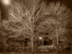 monochrome day 7 revisit (Robbyadam) Tags: trees monochrome hdr reddeer ep3 robbyadam