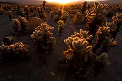 DSC_2335.jpg (Matt_Lum) Tags: desert hiking joshuatree mojave d90